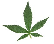 marihuana_thumb[3]